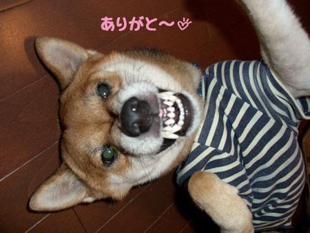 狂犬バージョン